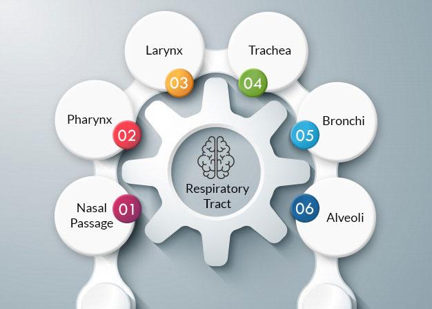 Eduauraa Mind Map technique